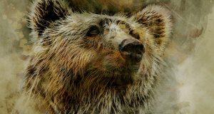 obraz niedzwiedz grizzli